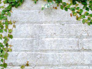 צמחייה מטפסת לפרגולה